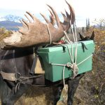 Alaska Moose Hunt Pack