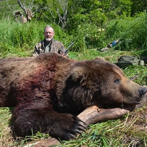 alaska peninsula brown bear