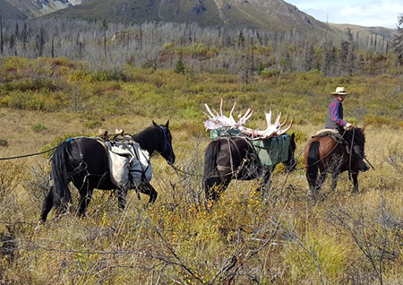 horse_assisted_moose_hunt