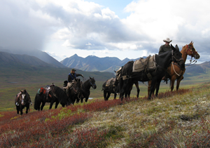 Wrangell_Mountains_Horse Assisted Hunt