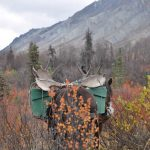 Horse-Assisted Alaska Moose Hunt