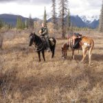 Vrem Rough & Ready Guide Service Horses