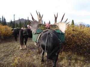 Alaska Hunt on Horseback