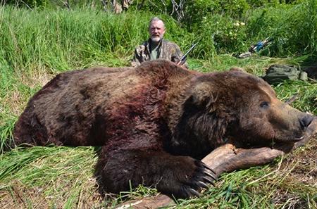 brown_bear_alaska_peninsula