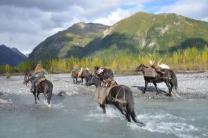 moose packer river crossing